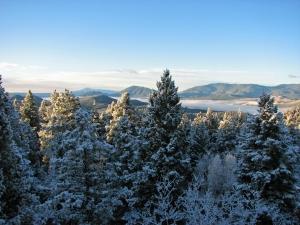 Conifer Snowy movin day